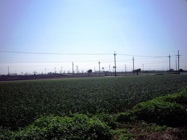 田野.JPG