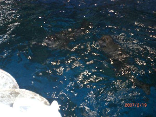 061.可愛的海..呃.獅?豹?
