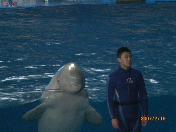 073.超可愛小白鯨
