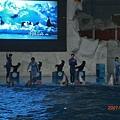 074.海獅表演