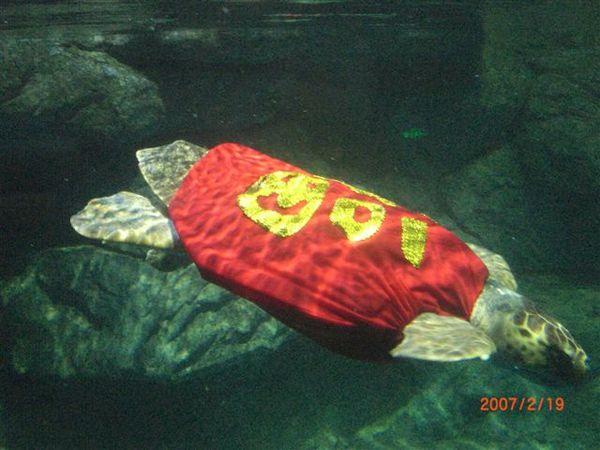 079.辛苦的海龜