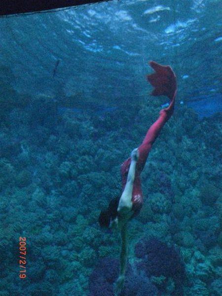 085據說這是美人魚