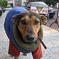 黎明新村郵局的狗狗