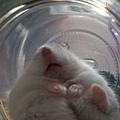 涼涼的玻璃瓶很好睡