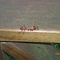 長相奇特的蟲蟲