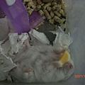 鼠生一大樂事