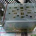用透明夾作的魚缸蓋