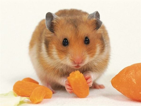 mouse011.jpg