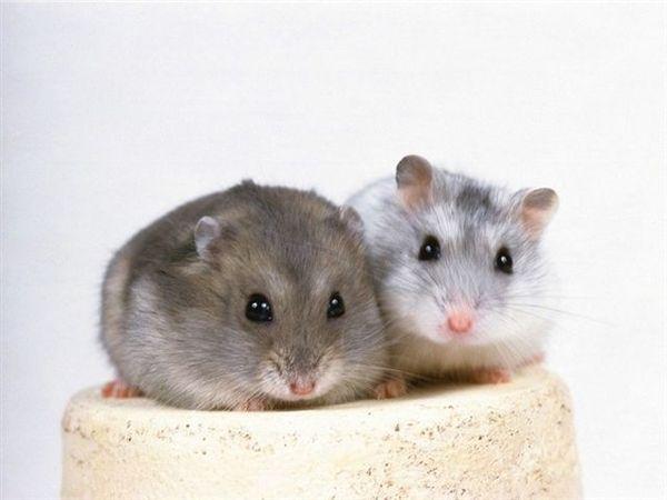 mouse013.jpg