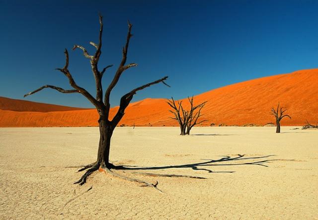 Namibia_Dead_Vlei_Sussosvlei_Namib_Desert.sized.jpg