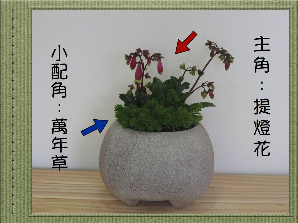 慈大春季2.002