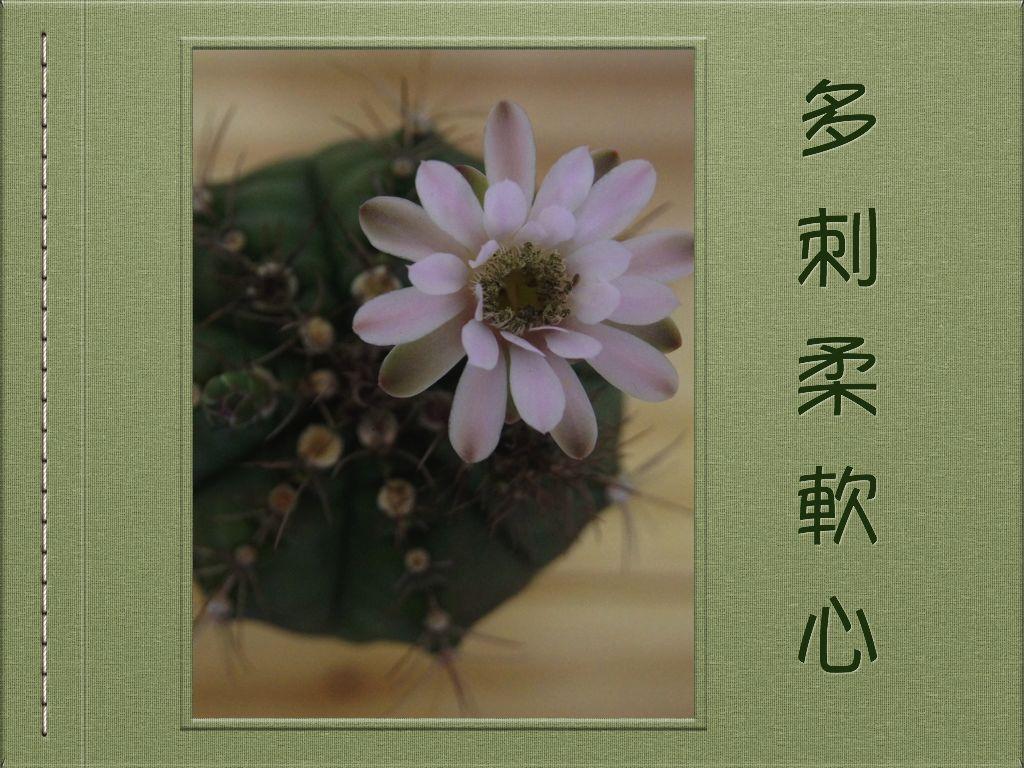 慈大春季3.001