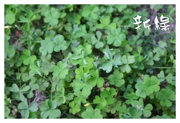 01-Daphne Tang-3901
