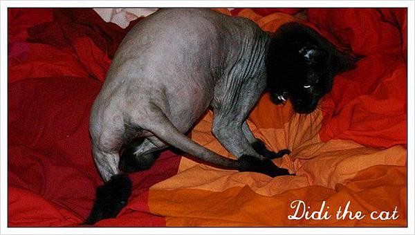 笨貓抓尾巴