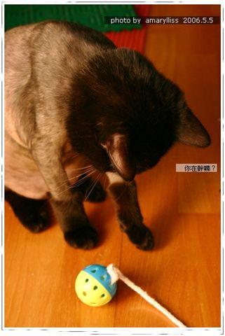 2006.5.5 玩鈴鐺球