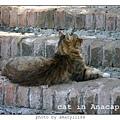 cat-anacapri-1