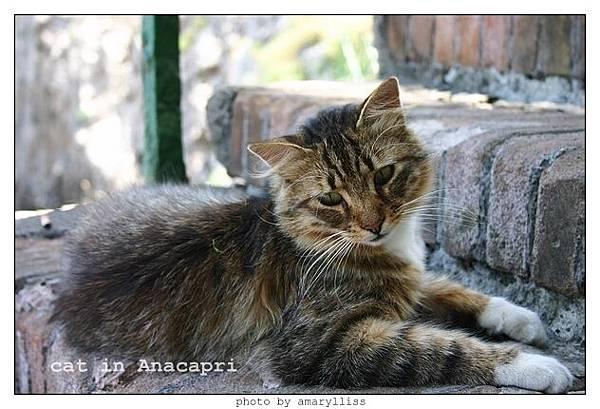 cat-anacapri-2