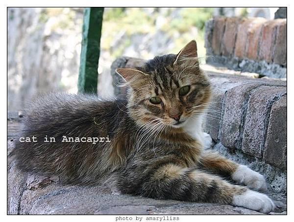 cat-anacapri-3