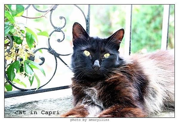 cat-capri-1