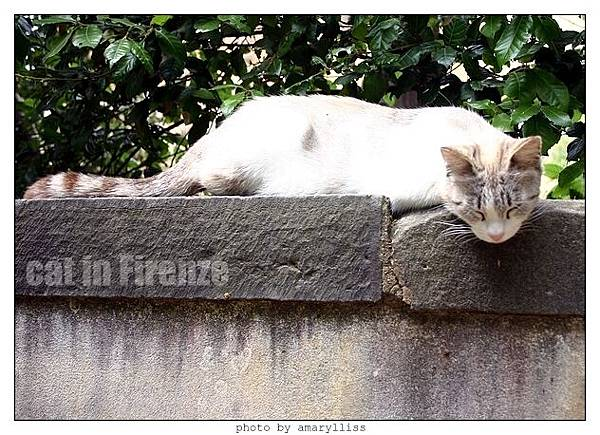 cat-firenze0608-01