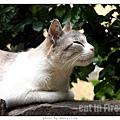cat-firenze0608-02