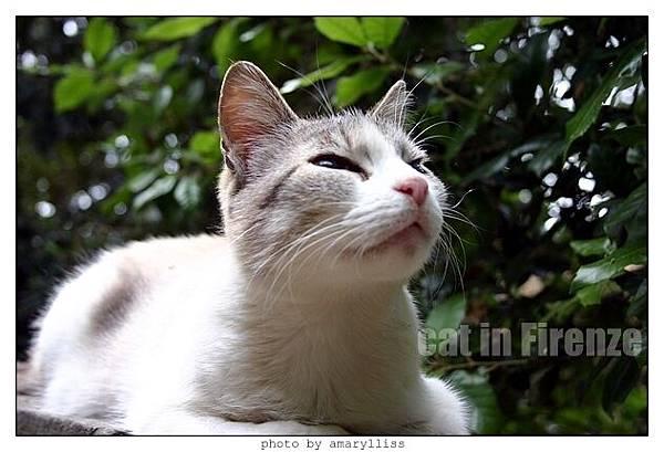 cat-firenze0608-04