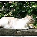 cat-firenze0608-05