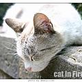 cat-firenze0608-06