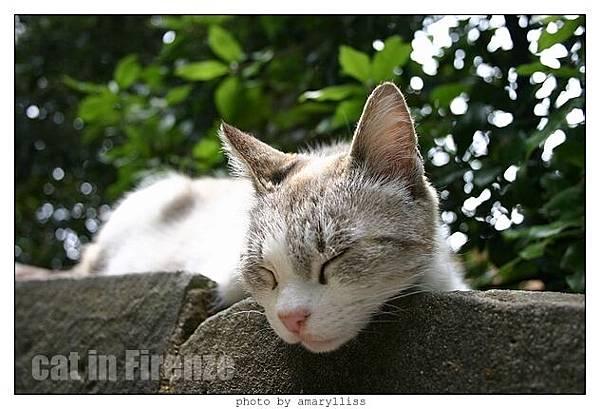 cat-firenze0608-08
