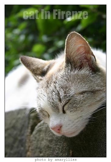 cat-firenze0608-09