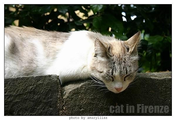 cat-firenze0608-12