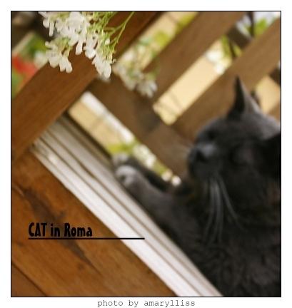 cat-roma0602-7