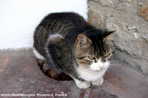 cat-mougins-0622-01.jpg