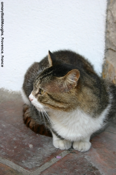 cat-mougins-0622-03.jpg