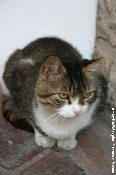 cat-mougins-0622-04.jpg