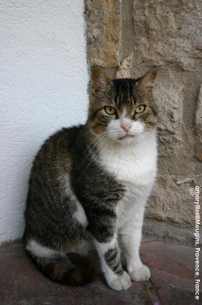 cat-mougins-0622-06.jpg