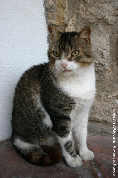 cat-mougins-0622-07.jpg