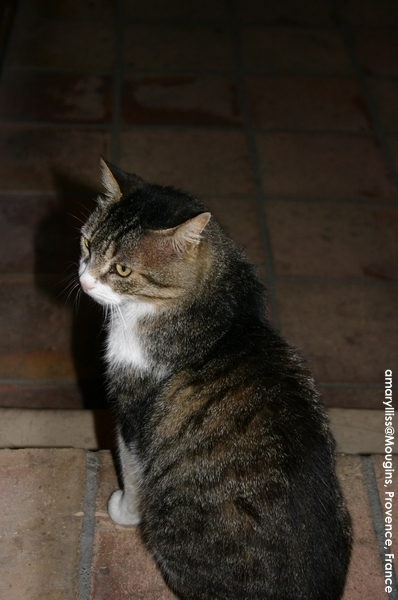 cat-mougins-0622-08.jpg