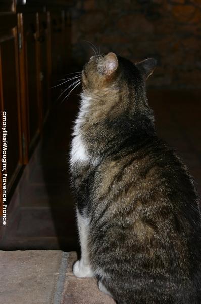 cat-mougins-0622-09.jpg