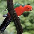 漫步雨林中有機會遇見繽紛多樣的各種動植物%08。.jpg