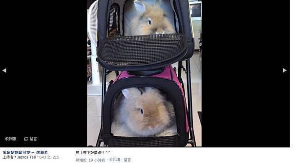 18兔.JPG