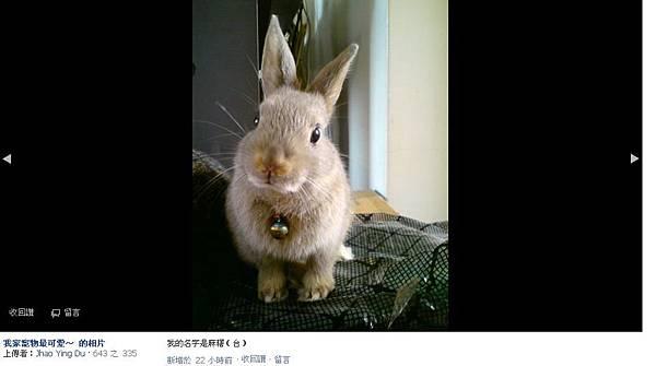 24兔.JPG