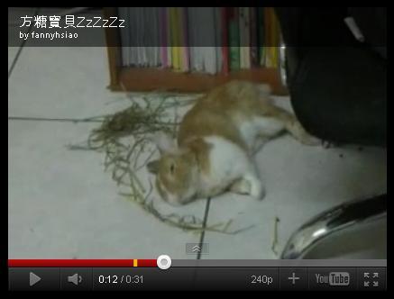 睡美兔.JPG