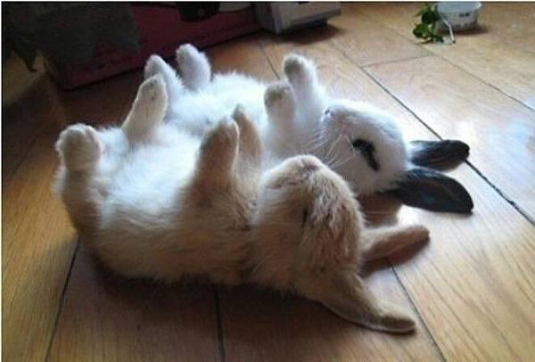 Bunny_88