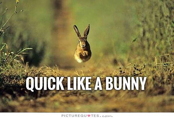 quick-like-a-bunny-quote-1
