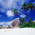[wall001_com]_beach_coconut_palm_52580