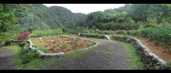 菜圃.jpg