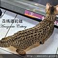 奧莉薇20100906-0664.JPG