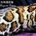 20100514-Famous-0525.JPG