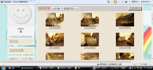 米克斯充當小豹貓販賣1-500.JPG